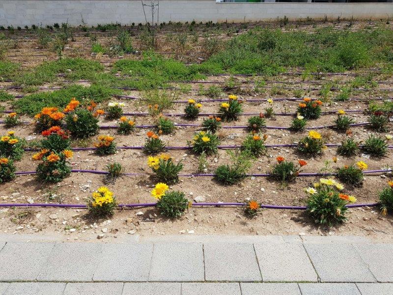 פרחים טיילת כרמי גת