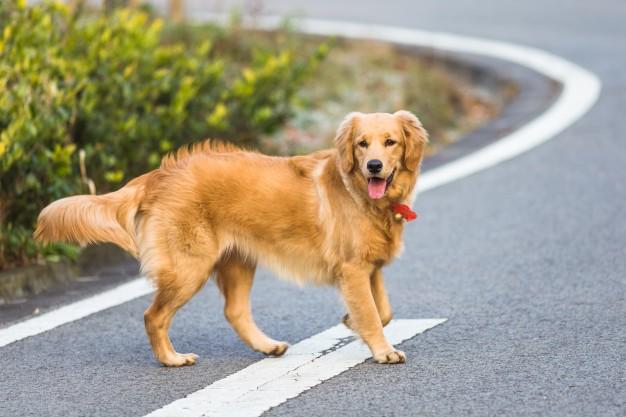 כלב מטייל ללא רצועה? 500 שקל קנס