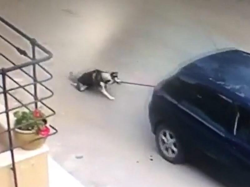 תושב מושב שליד קריית גת קשר כלב לרכבו ונסע: בית המשפט גזר עליו 140 שעות לתועלת הציבור והוצאות בגין טיפול בכלב