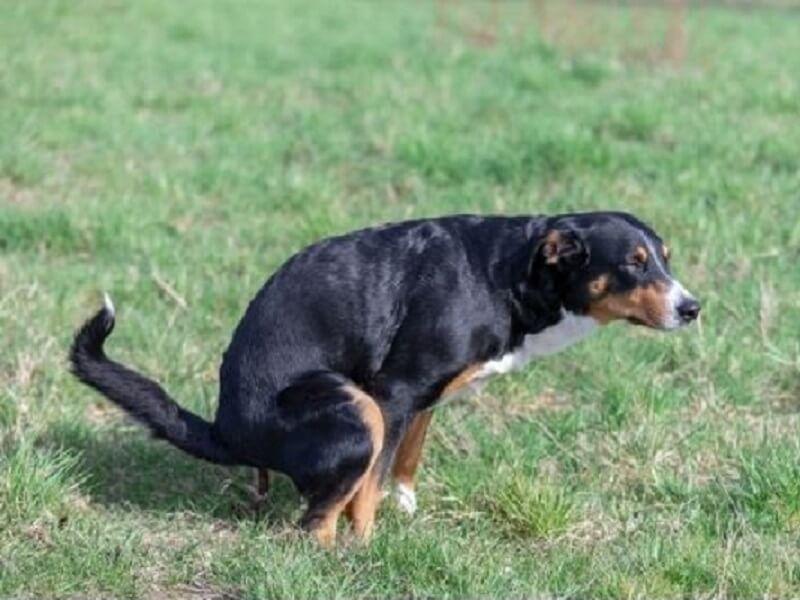 הקקי הזה שלך? צואת כלבים שהפכה לחלק שגרתי מהנוף