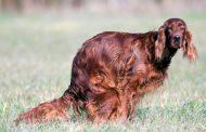 הוגדלו הקנסות בקריית גת על אי איסוף צואת כלבים: לא אספת? שלם 730 שקלים